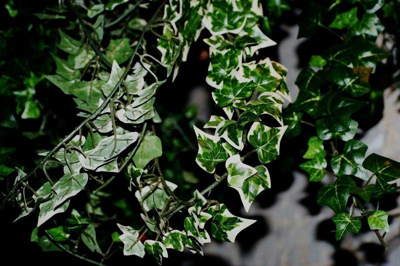 Joli. Liere Plants Green