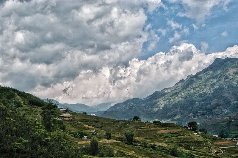 Vietnam SaPa Mountain Environment Landscape Plant Scenics - Nature Cloud - Sky Beauty In Nature Land Sky Field Mountain Range No People Nature Rural Scene Green Color Growth Tree Outdoors Tranquility Day