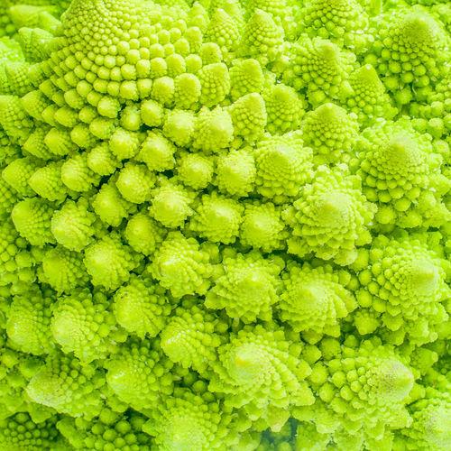 Full frame shot of fresh romanesco broccoli