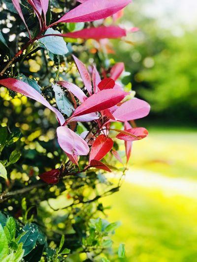 Plant Beauty In