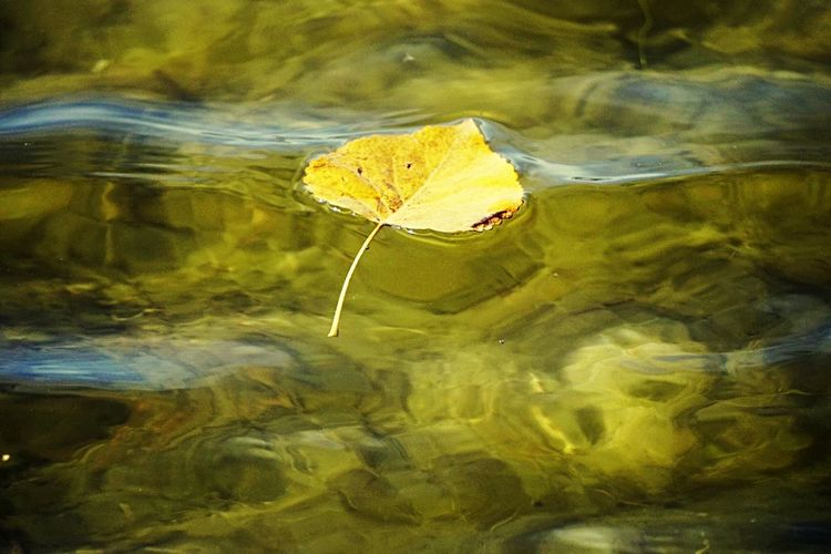 Fall Beauty Autumn Fall Fall Leaf Water EyeEm Gallery EyeEm Nature Lover Lake Nature Canada