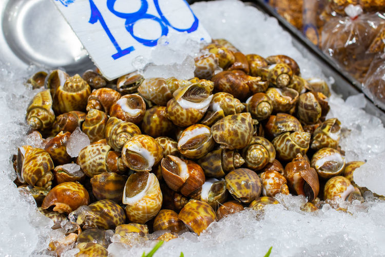 High angle view of shells for sale at market stall