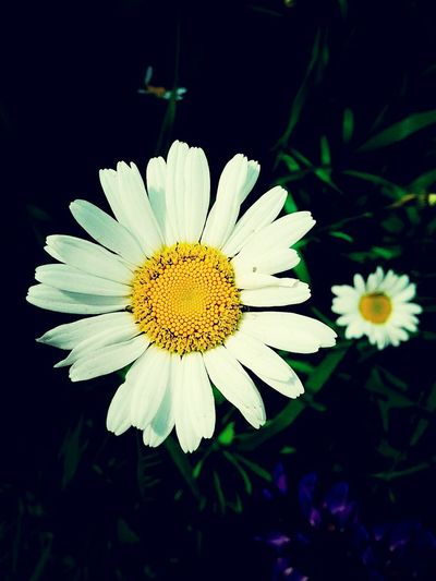 Flower Flower Head Fragility Nature Beauty In Nature Freshness Petal Yellow Pollen Beauty Close-up Growth Plant No People Outdoors Black Background Day
