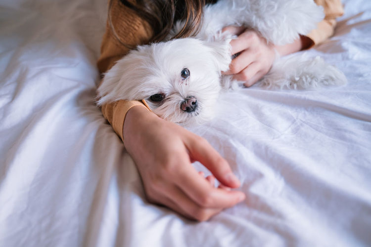 Midsection of woman with dog resting on bed
