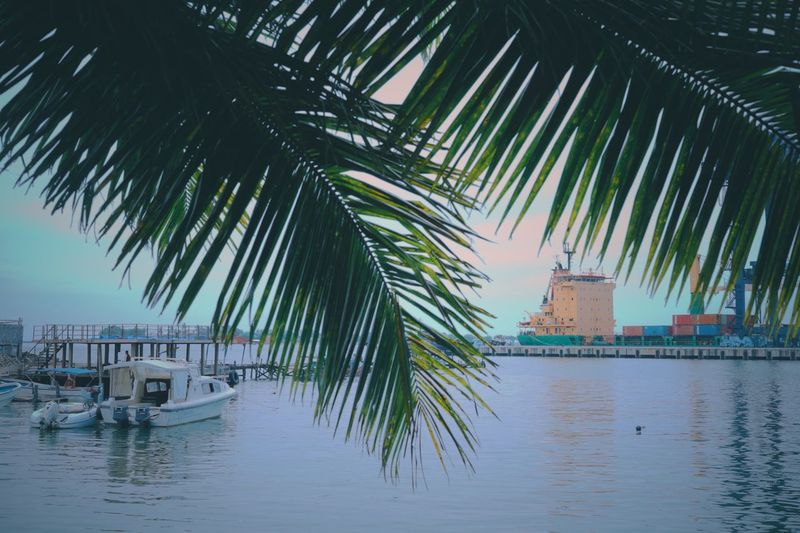 Sea Water Nature No People Palm Tree Tranquility Waterfront Outdoors Building Exterior Beauty In Nature Architecture Day Sky