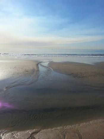 Sea Enjoying The Sun California Enjoying The Sights