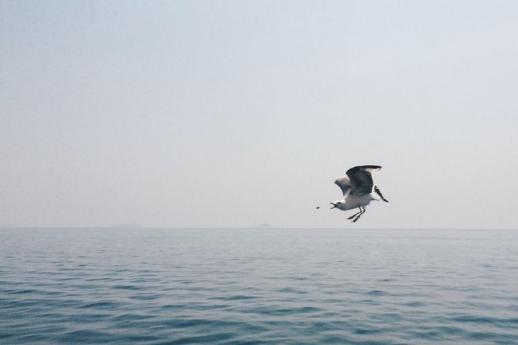 Sea Water Bird Horizon Over Water Animals In The Wild Animal Themes One Animal Flying Waterfront Wildlife Scenics Tranquil Scene Tranquility Copy Space Freedom Seagull Nature Clear Sky Mid-air