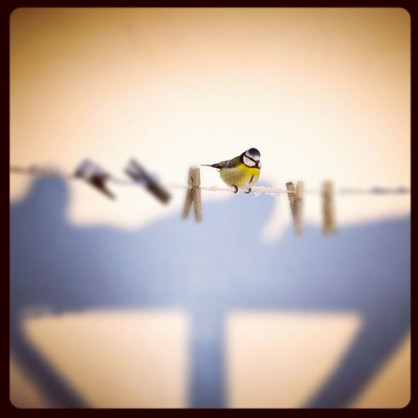 Nature Bird Bird Photography