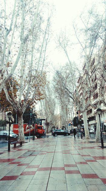Ice Age Tree City Sky Day City Life Nature