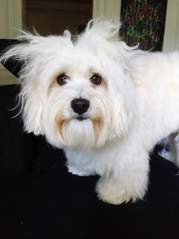 Hello World Isis😍 Myprincess🐶🐶 Ilovemydog Dog Love Dog Life