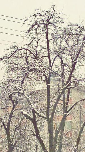 Karadeniz Artvin Arhavi Arkabi Ilk Kar ❄❄❄❄⛄
