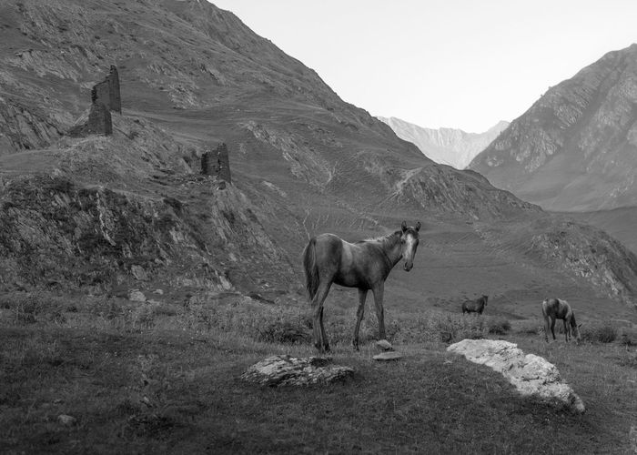 Horse standing in a mountains
