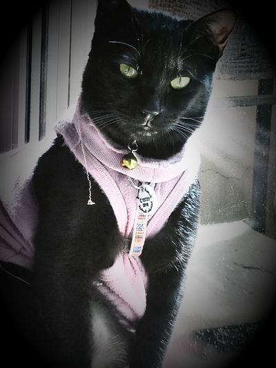 😻my Sweety Cat😻 Ms.Kelly😊 Close-up Cats Of EyeEm Cat♡ Cats 🐱 Catsofinstagram Cat Photography Blackcatlove Blackcatsaregood Blackcatsclub Blackcatbeauties Blackcatsaregoodluck