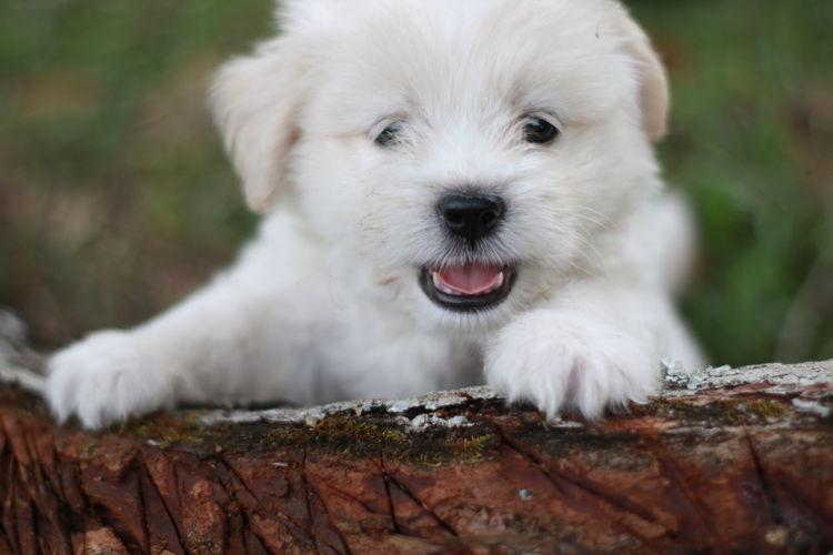 PorkyBear Cute