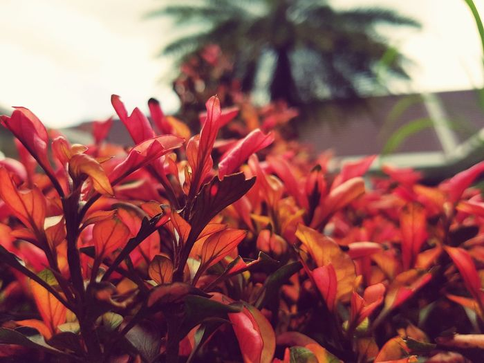 Flower Beauty In Nature Close-up Nature Growth Day Plant Outdoors No People Flower Head Horizontal Fragility Freshness