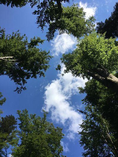 Tree Plant Sky
