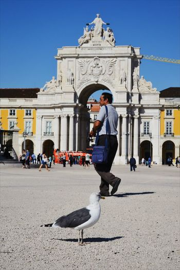 Adapted To The City Citypicture Lisbon City Life Strange Things Strangers Goodoldday CityLifeStyle Animals Posing Visionary