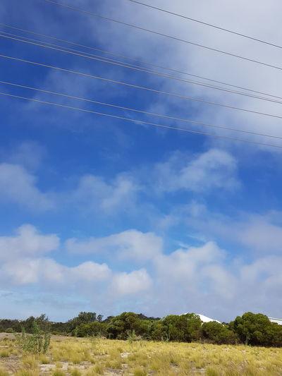 EyeEm Selects Blue Tree Sky Cloud - Sky