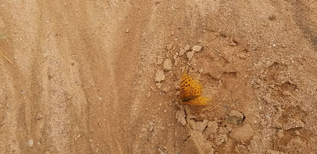 butterfly wash