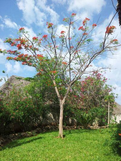 Tree And Sky Nature Colours Beautiful Nature