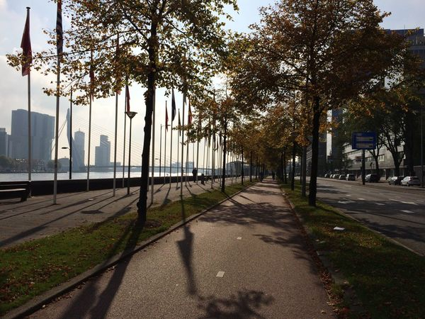 Architecture Netherlands Dutch Europe Urban City Rotterdam River Bicycle Lane Flag Pole Shadow River Bank  Waterline Street Trees Autumn Traveling Urban Landscape Urbanphotography Urbanity Urban Nature