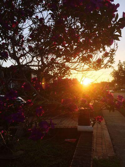 Sun shining through trees at park during sunset