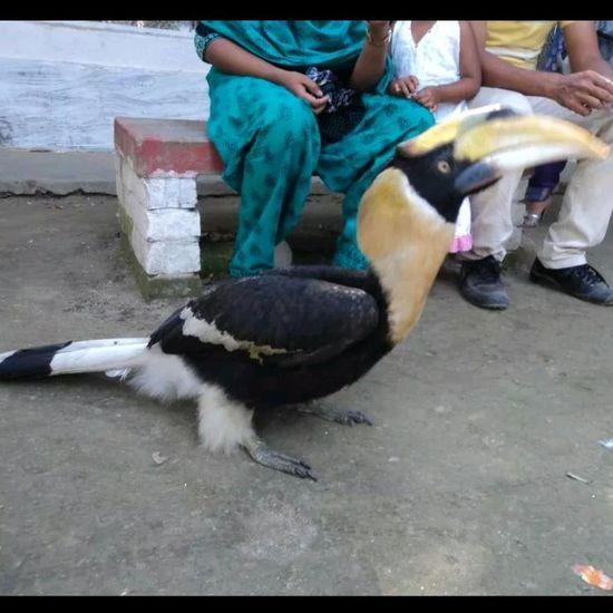 Dhonesh pakhi@Manikgonj... Bird