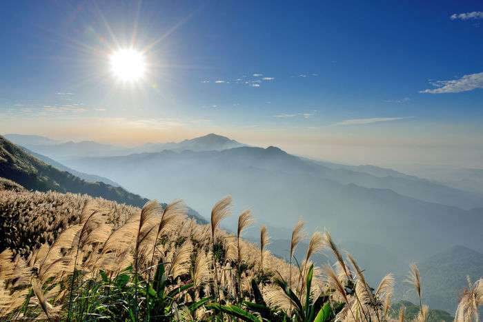 Autumn hill, open Manshan flowers, like snowflakes beautiful. Autumn Flowering Miscanthus Sunlight Beauty In Nature Broad View Day Fall Growth Landscape Mountain Mountain Flowers Mountain Range Nature No People Outdoors Physical Geography Plant Scenics Sky Sun Sunlight Tranquil Scene Tranquility Wind