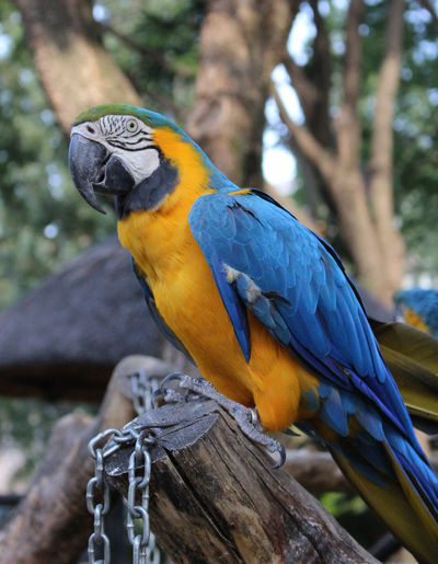 Animal Animal Themes Animal Wildlife Animals In The Wild Beauty In Nature Bird Bird Park Branch Day Focus On Foreground Gold And Blue Macaw Hyacinth Macaw Macaw Nature No People One Animal Outdoors Parrot Perching Plant Tree Vertebrate Wood - Material Zoological Garden Zoology EyeEmNewHere