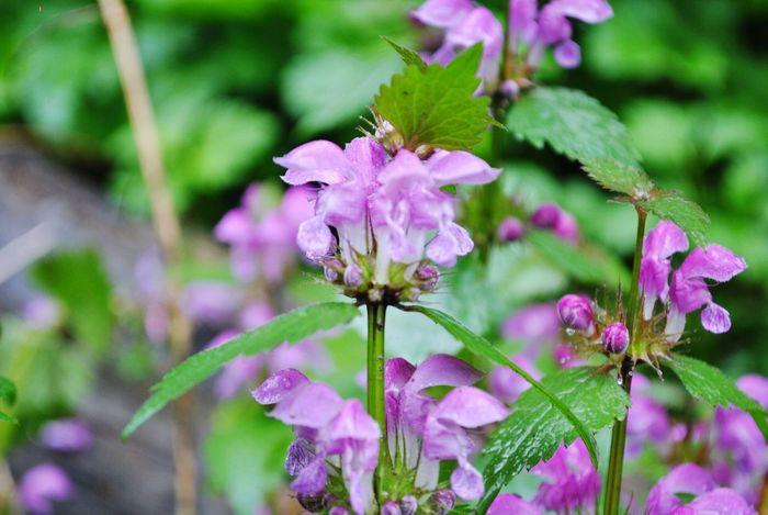 Природа цветы последождя Адыгея
