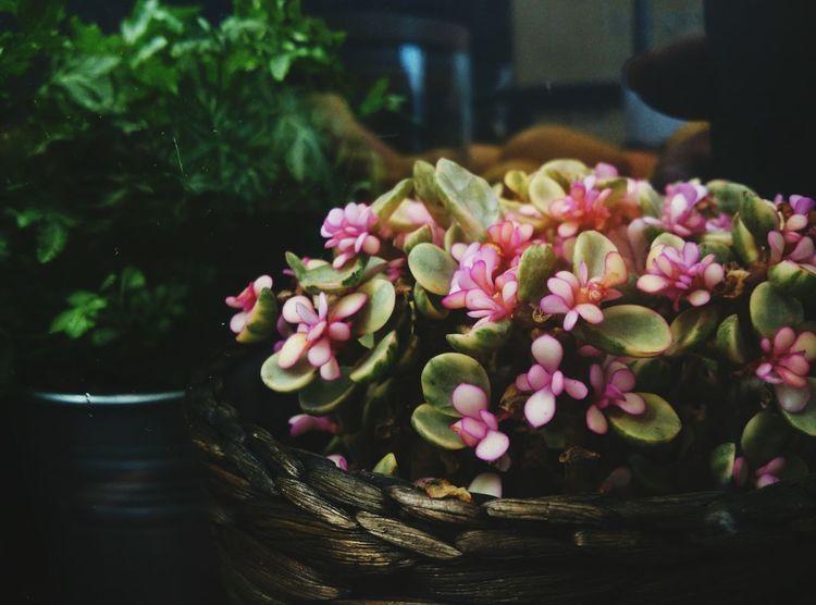 肉肉开花了 Flowers Walking Around Office Hours