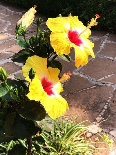 Flower Petal Fragility Flower Head Outdoors Day Yellow