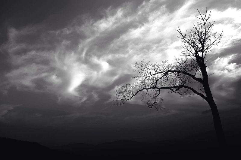 Nature Tree Landscape Light And Shadow Sky Black And White Blackandwhite Photography Blackandwhite