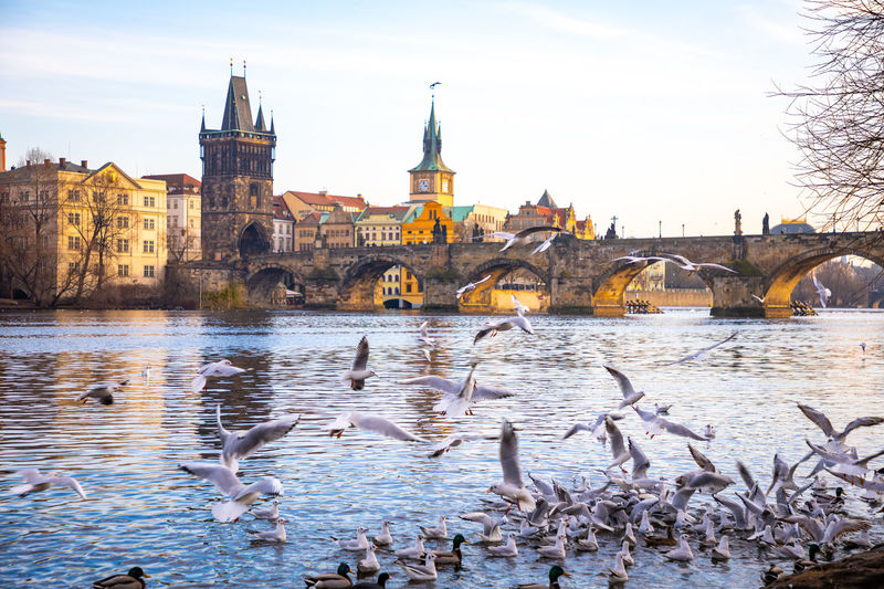 View of birds by river against buildings in city