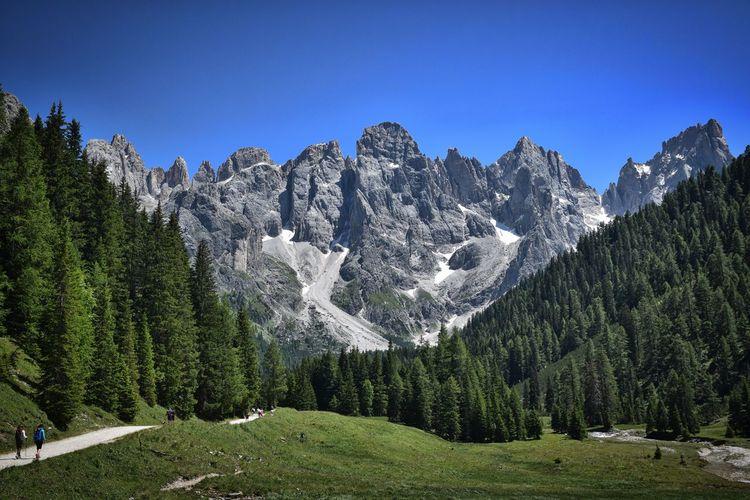 Lush Forest Landscape Against Rocky Mountain Range
