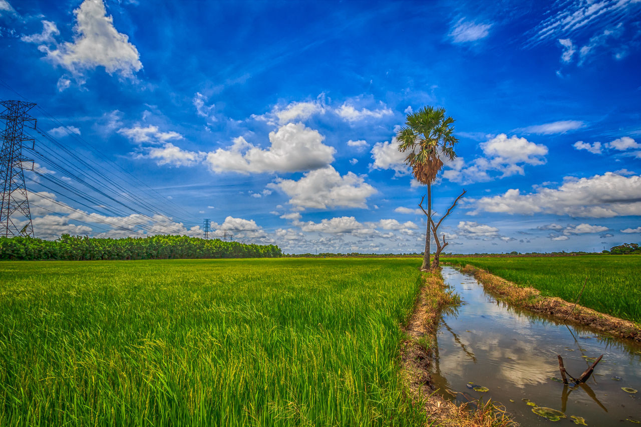 tranquil scene, beauty in nature, nature, tranquility, scenics, sky, grass, field, growth, landscape, cloud - sky, green color, outdoors, day, no people, agriculture, water, blue, rural scene, tree, plant, lake