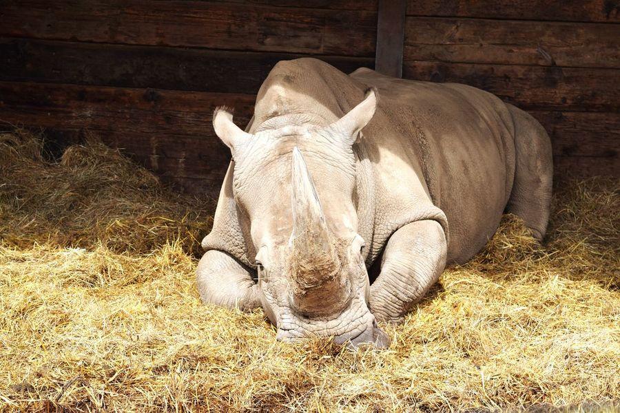 Hipopotamó Nature Wildlife Wildlife & Nature Animals Animal Lover Safari Park Safaripark