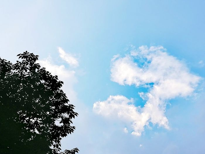 Sky Cloud - Sky Tree Blue