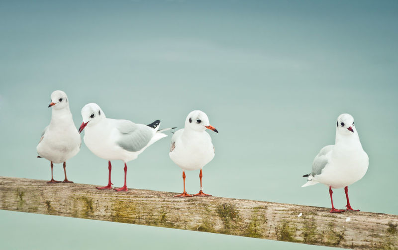 Seagulls perching on a sea against sky