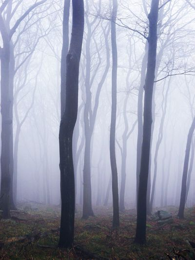 Ghostry forest