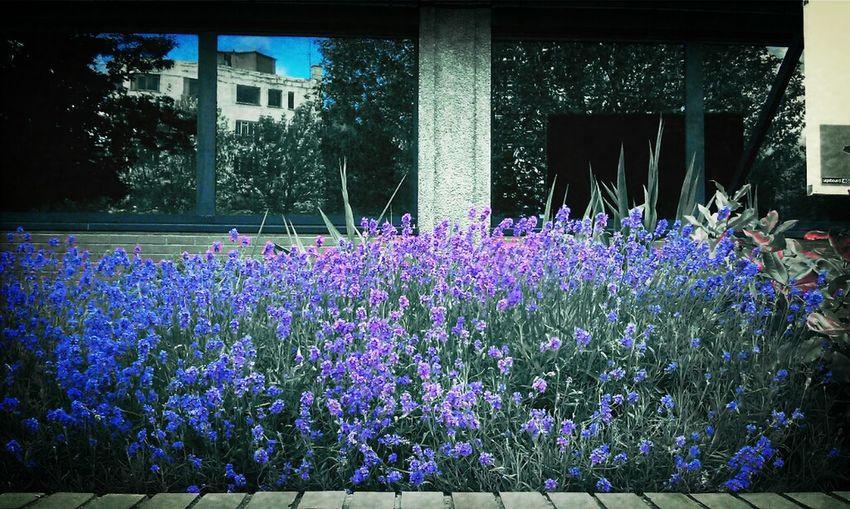 Flowers Sky Purple Queen Square Colour Splash