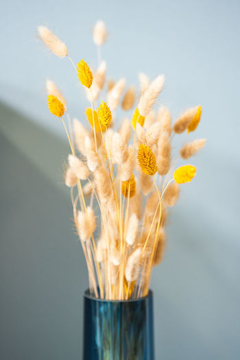 Close-up of yellow flower in vase