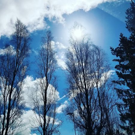 Blue Sky Tree Cloud - Sky Outdoors Beauty In Nature Day Nature Landscape Sunshine Sunny Day Sunny Scenic
