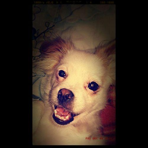 Selfie Selfiepuppy Funny Happypuppy Instapuppy Hermosa Beautiful Cute 😍😘 A mi me toco tener a la cachorra mas hermosa, tierna y además obediente Iamhappy 👧💜 ILove Amoamicachorra 🐩 Mi preciosa 🐾 Loveanimal Lovepet