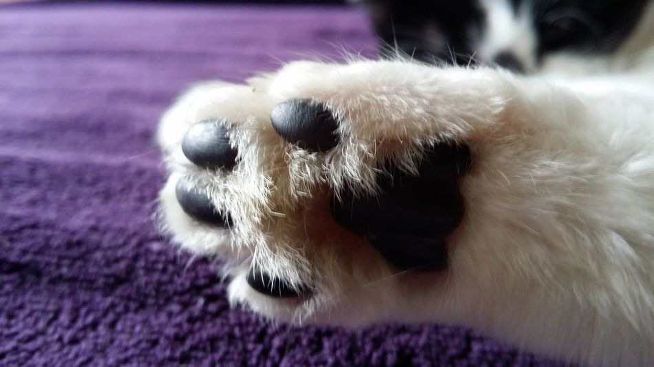 Paw Prints Domestic Animals Close-up Pets One Animal Animal Themes Domestic Animals Pets Close-up