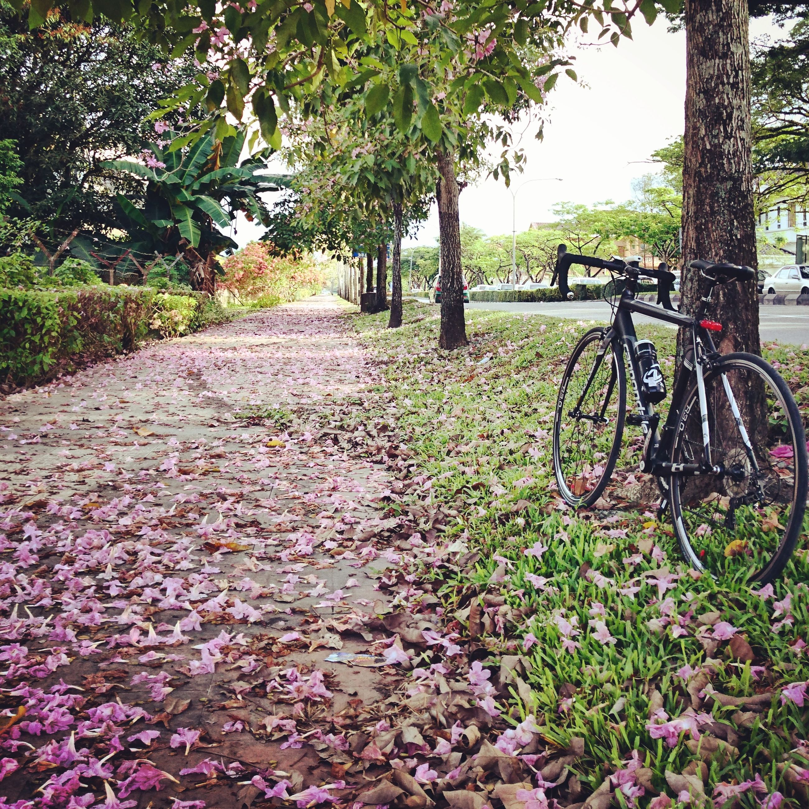 bicycle, transportation, mode of transport, land vehicle, tree, travel, stationary, growth, grass, plant, parking, footpath, narrow, flower, day, park - man made space, parked, the way forward, green color, nature, cycle, outdoors, freshness, petal, beauty in nature, tranquility, surface level