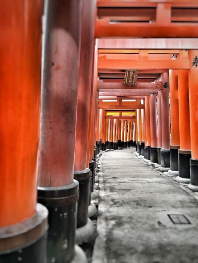 Torii gates at shinto shrine