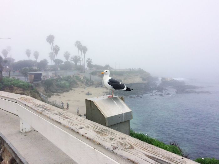 Bird Birdspotting Animals In The Wild Nature Beach Beachphotography