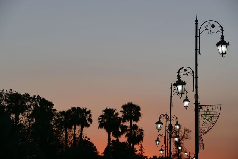 Low angle view of street lights and trees against sky during sunset