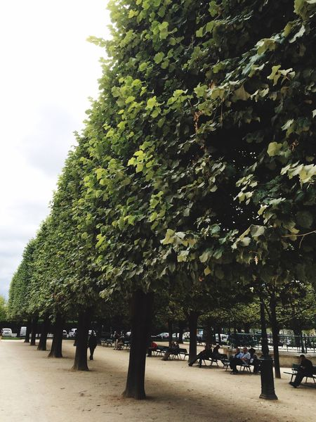 Everything In Its Place Trees Paris France Garden Notre-Dame Urban Geometry Geometry The Week On Eyem